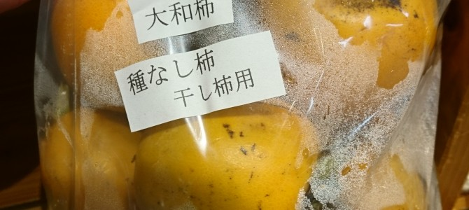 11月2日 本日のオススメ☆