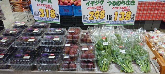 9月7日 本日のオススメ☆